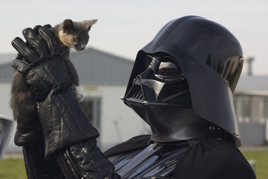vader_likes_cats_by_andyk77-d4gtzgh.jpg